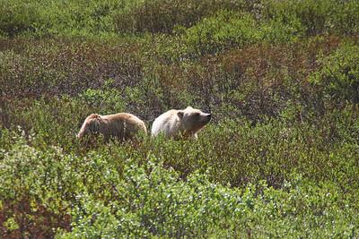 Denali NP. Alaska