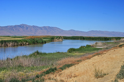 Bear River Migratory Bird Reserve